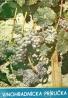 Kolektív autorov: Vinohradnícka príručka