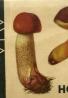 F.Kotlaba-Naše houby