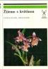 Š.Husák-Žijeme s květinou