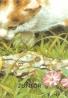 kolektív- Moje najmilšie zvieratká na dvore